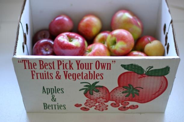 apple picking | two coast kitchen