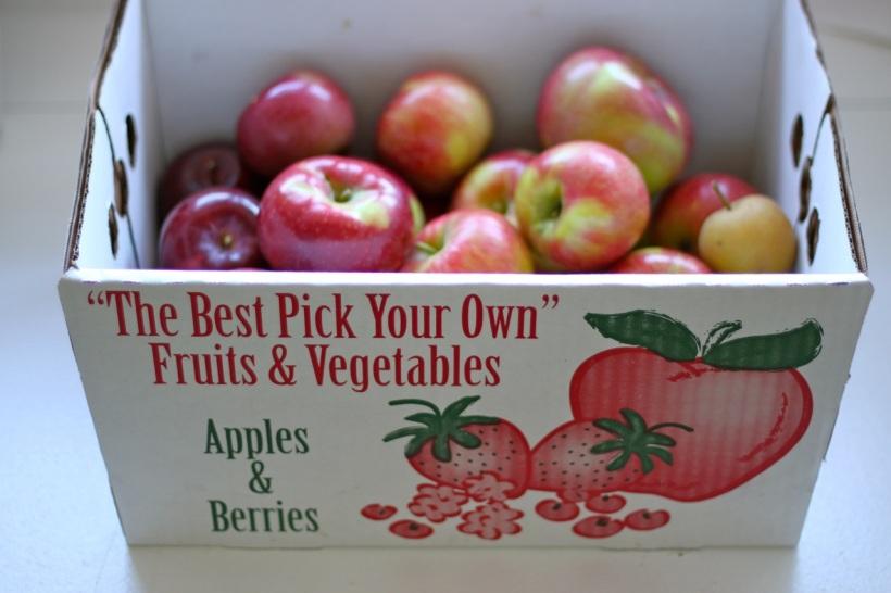 apple picking   two coast kitchen